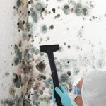 Black-Mold-Remediation-Boca Raton