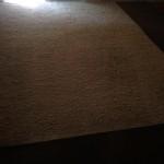 Boca Raton-Fleas-Cleaning