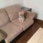 Boca Raton-Sofa-Pet-Stain-Cleaning
