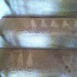 Boca Raton-Stairs-Carpet-Cleaning