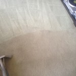 Carpet-Cleaning-Boca Raton