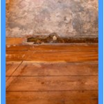 Wall-Mold-Removal-Boca Raton