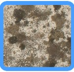 Water-Mold-Removal-Boca Raton